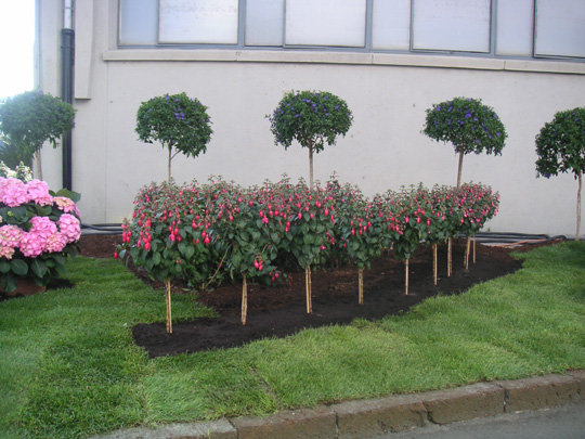 M ltiples combinaciones de plantas mostrad las vuestras for Plantas pequenas para jardin