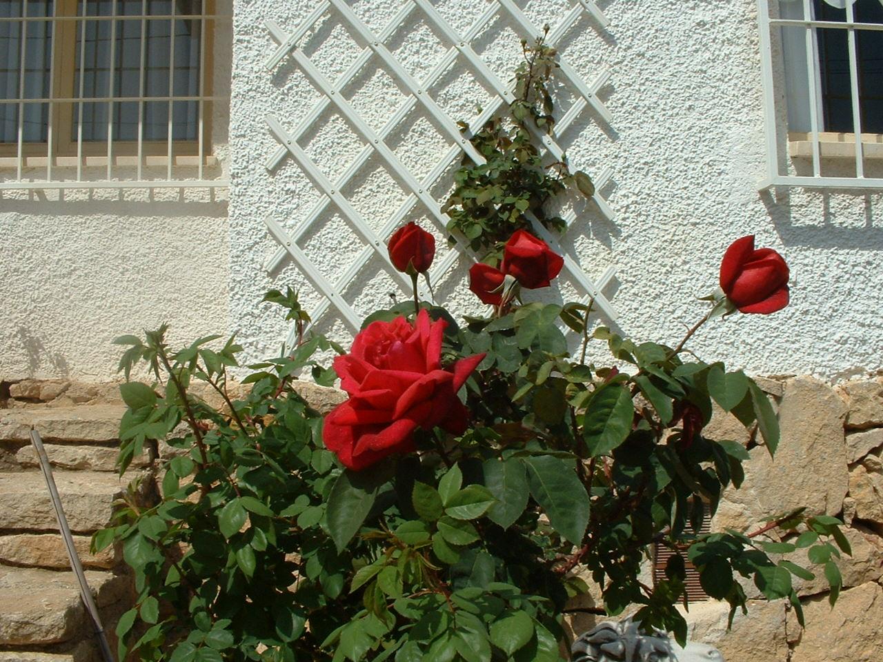jardin%20y%20peque%20011.jpg