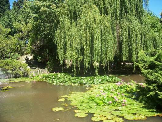 jardin-japones-escobar-lago-argentina-buenos-aires-provincia.jpg
