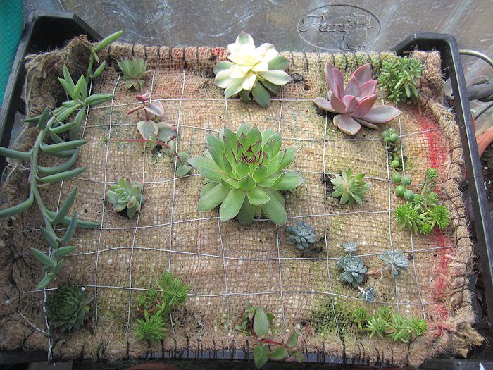 Como Hacer Jardines Verticales Amazing Materiales Para Hacer Un