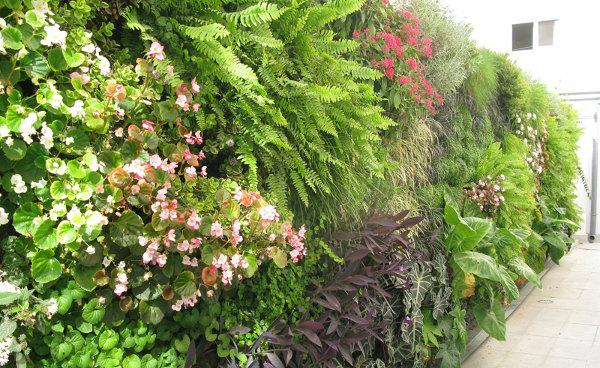 jardin-vertical-Clinica-Sagrado-Corazon-Sevilla-2.jpe