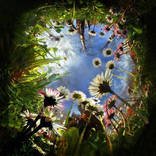 jardin_de_flores-12380%5B1%5D.jpg
