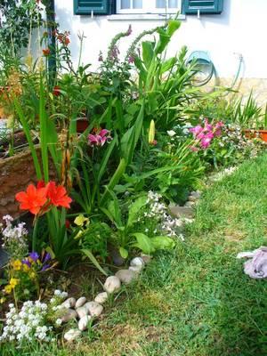 jardin_mai07.JPG