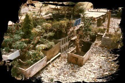 jardinera.jpg