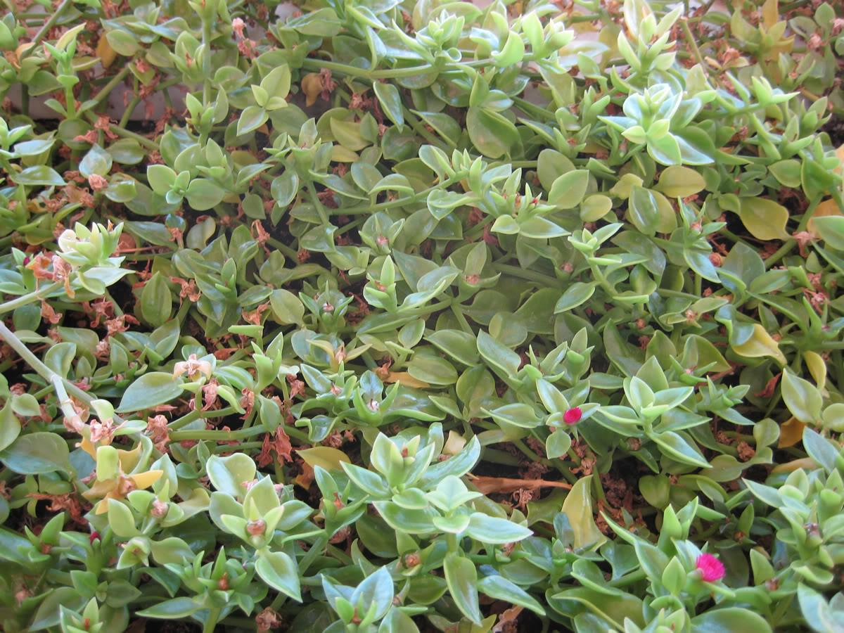 jardinera1.jpg