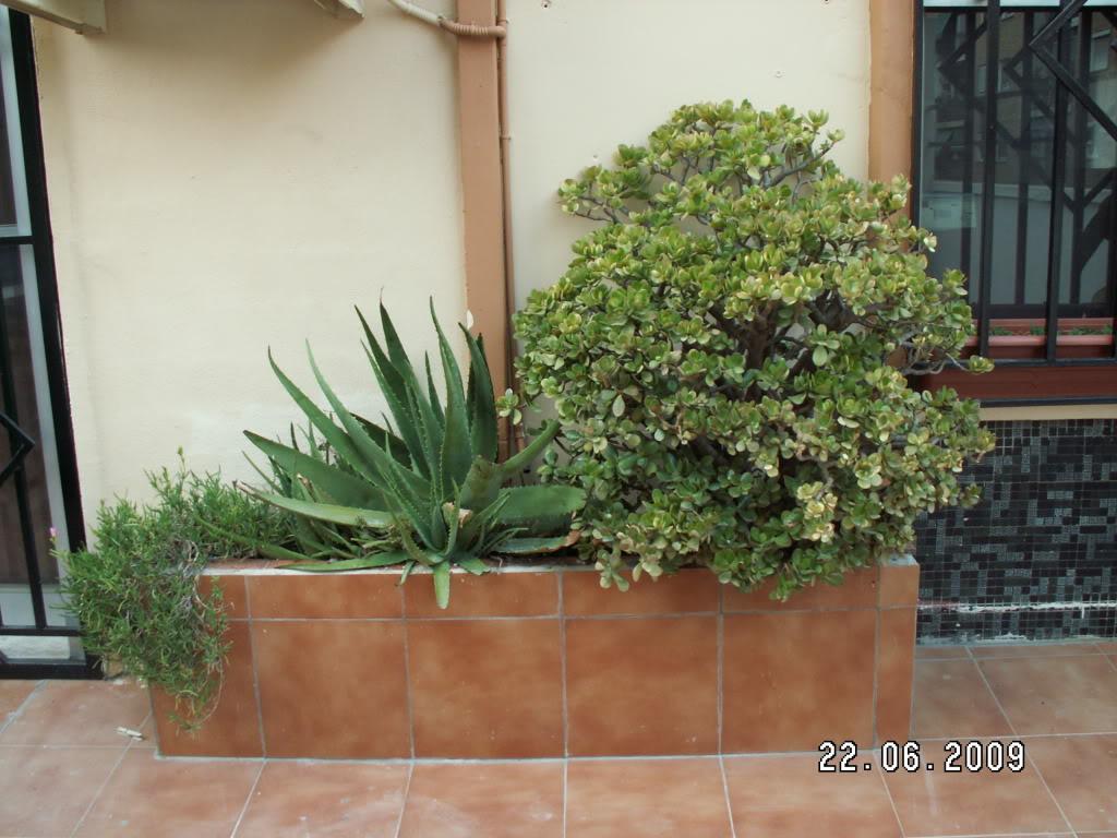 Ayuda para adecentar mi terracita - Tipos de jardineras ...