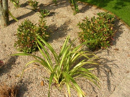 jardinmarian_124.jpg