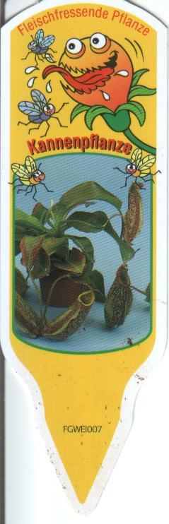 kannenfplant.jpg