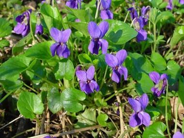 la-Violeta-01.jpg