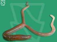 Los ungüentos de las picaduras de los parásitos