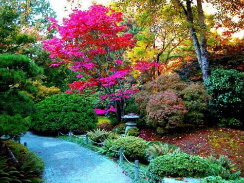 los-colores-en-el-jardin.jpg