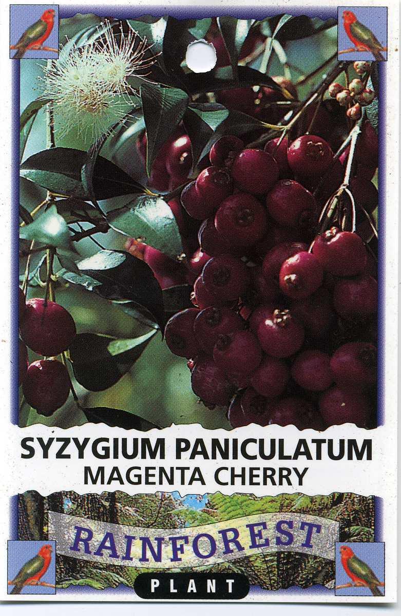 Magenta-Cherry-Syzygium-Paniculatum.jpg