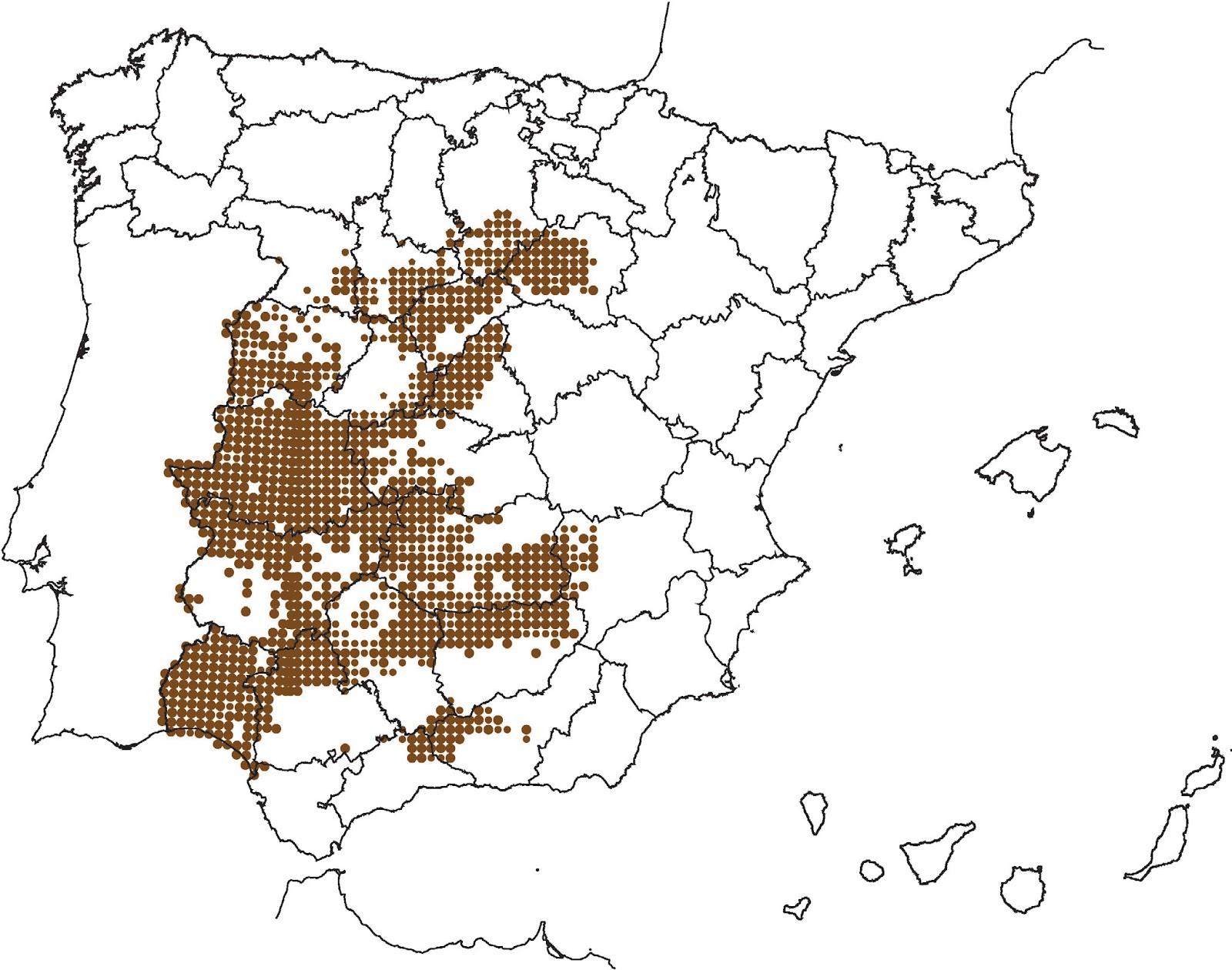 Mapa+rabilargo.bmp.jpg