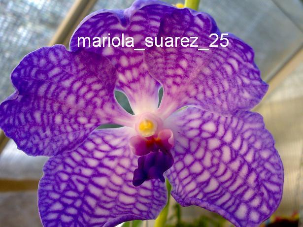 Mariola529.JPG