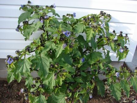 med-Visoflora-harmonie-de-vert-bleute-au-violet-pour-l-automne-1076.jpg