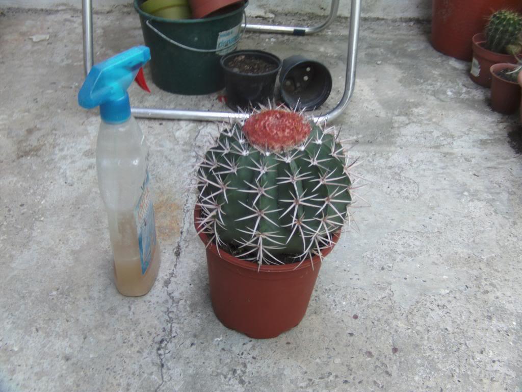 Melocactusjuntoabote_zpsff278cb8.jpg