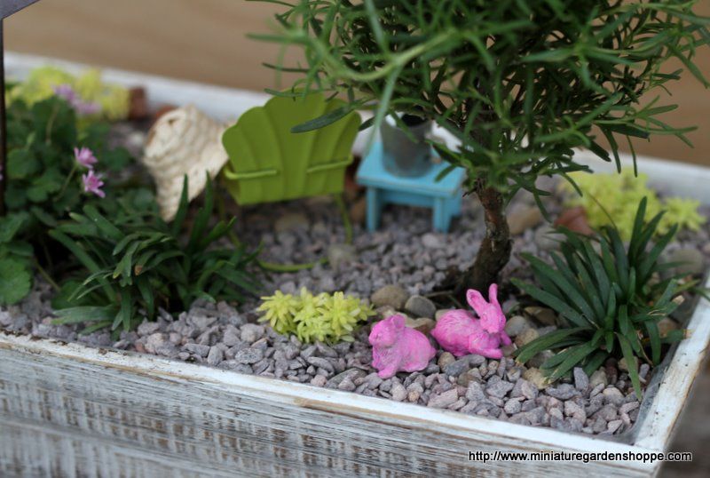 miniature_garden_31.JPG