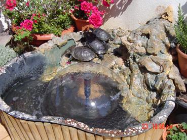 Estanque en mi terraza os lo ense o for Estanque para tortugas en terraza