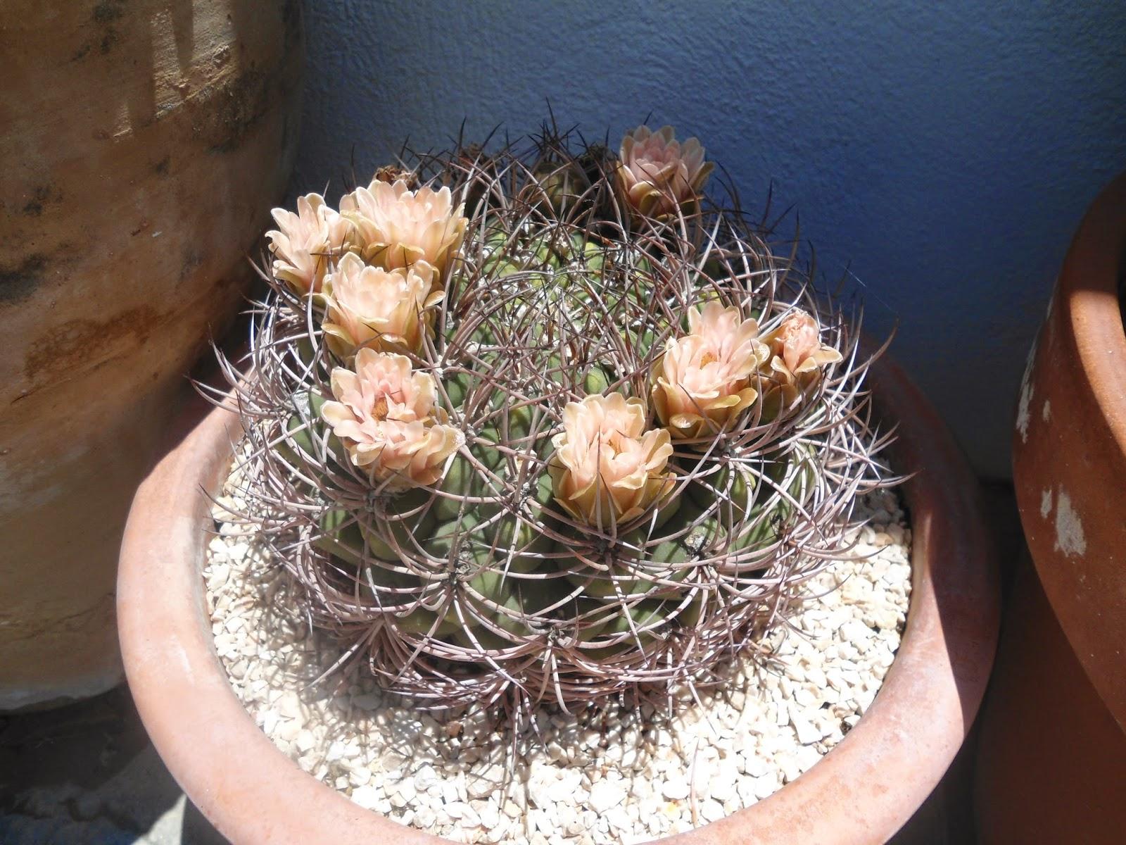 mis+cactus+002.JPG
