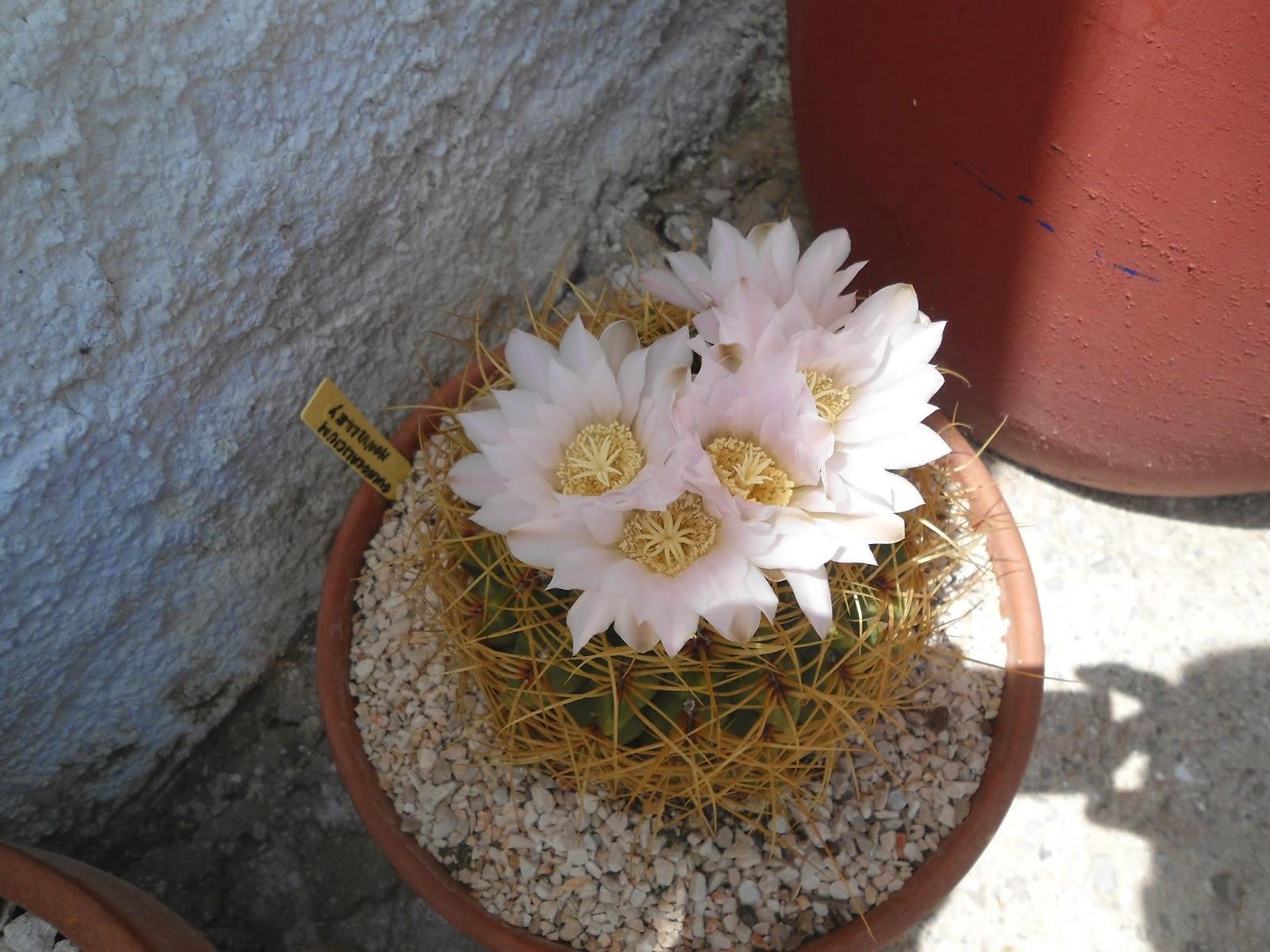 mis++cactus+036.JPG