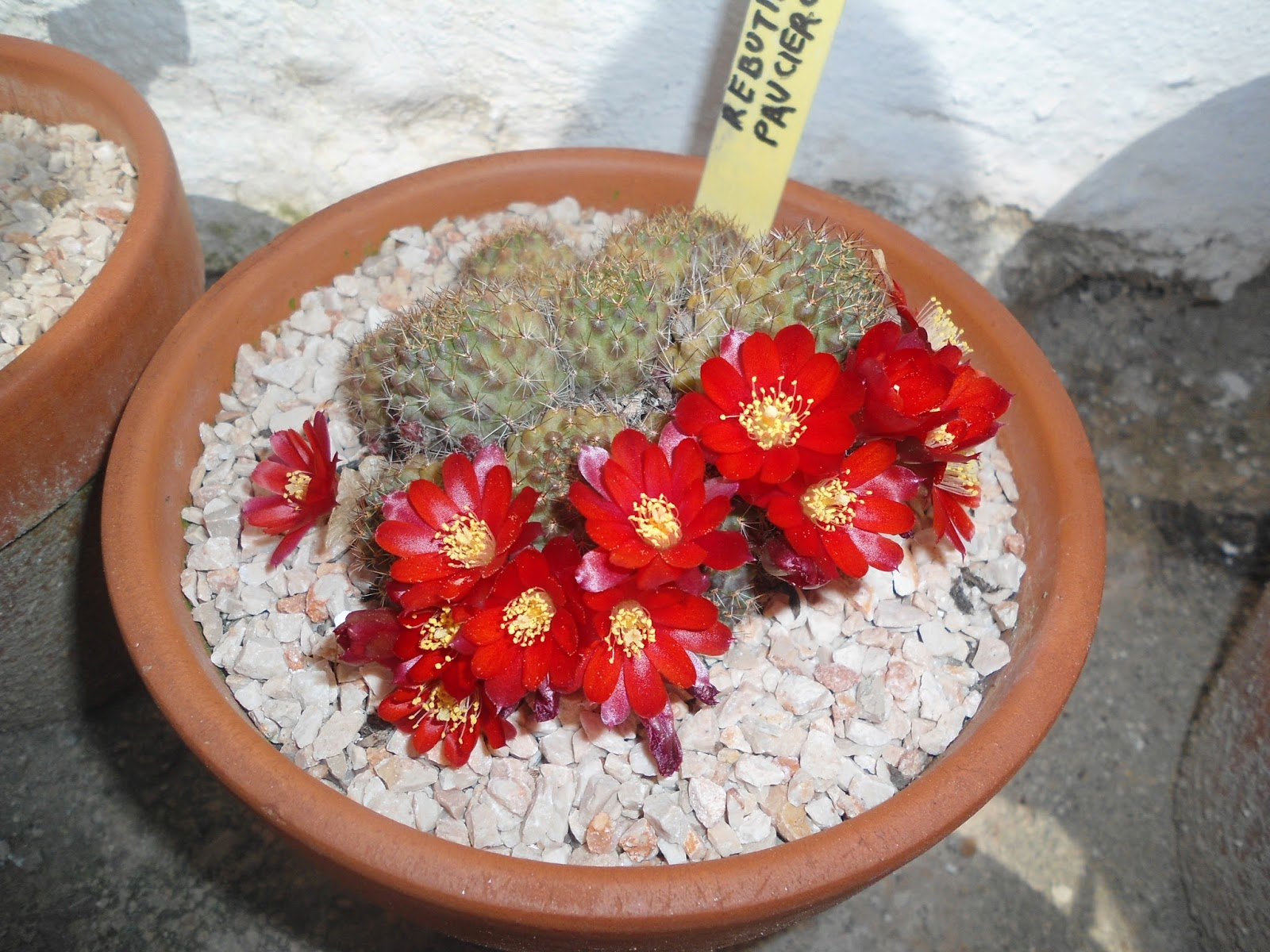 mis++cactus+051.JPG