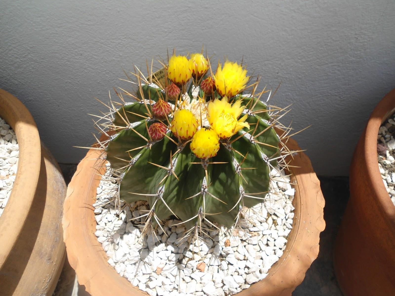 mis++cactus+096.JPG