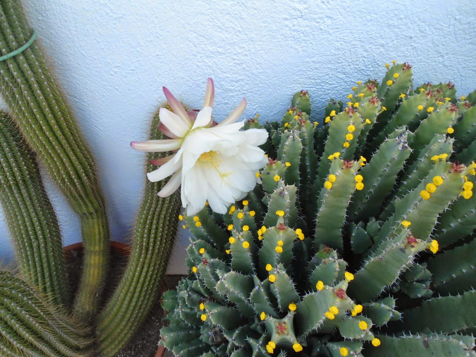 mis++cactus+119.JPG