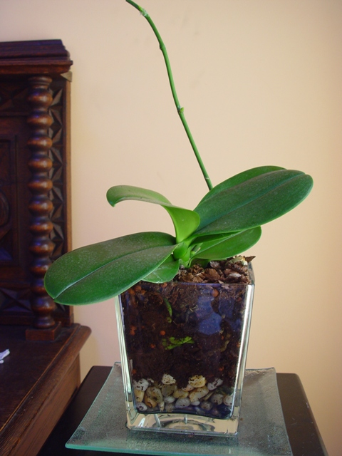 Mis Orquídeas 032.jpg