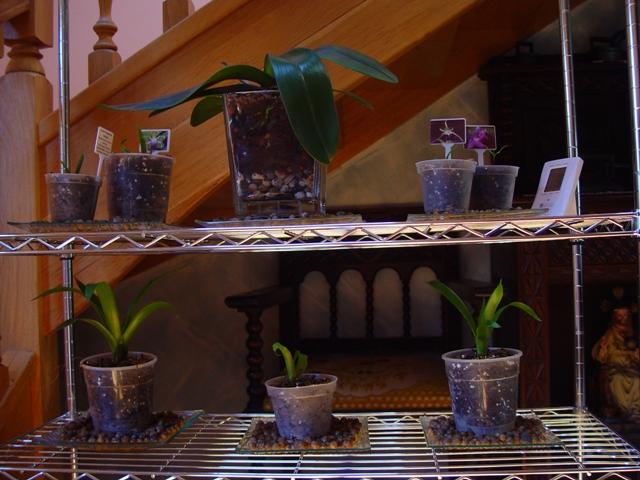 Mis Orquídeas 039.jpg