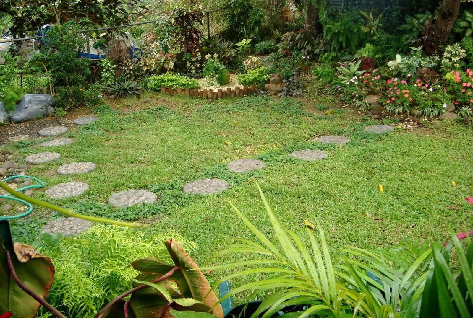 Fotos de mi jard n tropical for Ahuyentar gatos de mi jardin