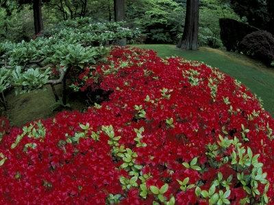 NA01_AJE0019_M-FB~Japanese-Garden-Azaleas-Portland-Oregon-USA-Posters.jpg
