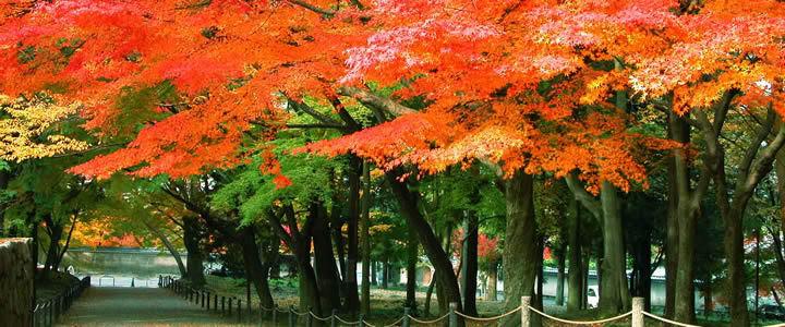 nanzenji-temple-sando.jpg
