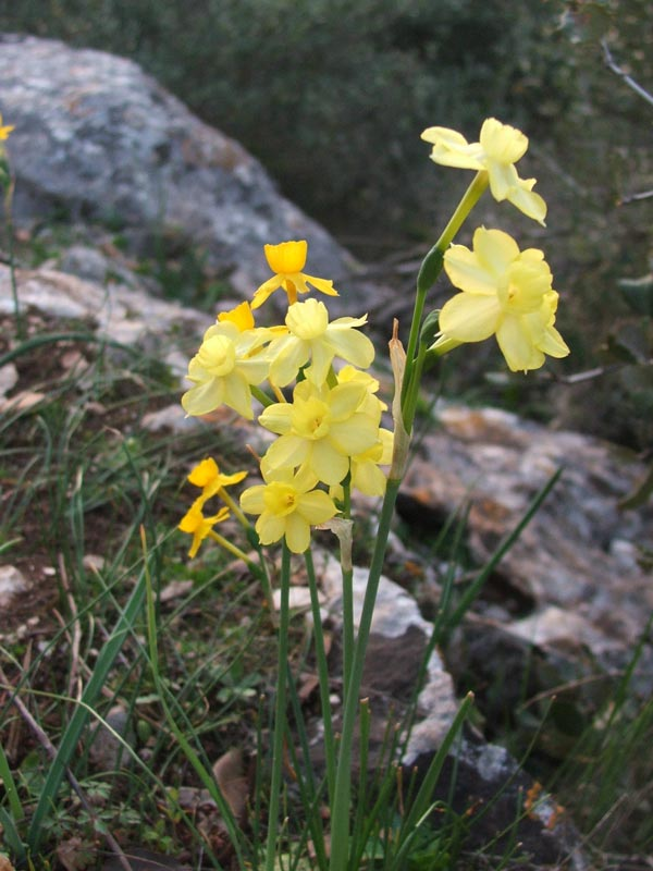 NarcissusX.jpg