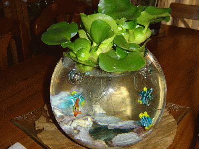Jacinto de agua planta acu tica flotante c mo se cuida for Plantas para estanques de agua fria