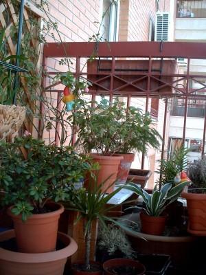 normal_balcon1a.JPG