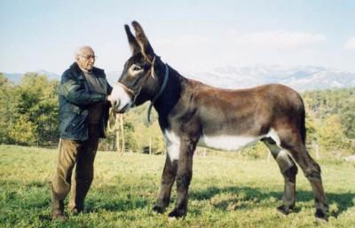 normal_burro%7E0.jpg
