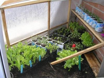 Pl ntulas y seguimiento de mi semillero en la terraza - Invernadero casero terraza ...
