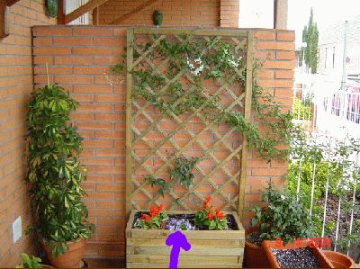 normal_jardinera%20devant%20amb%20Cam_anula%2C%20salvia%20y%20Passifflora.jpg