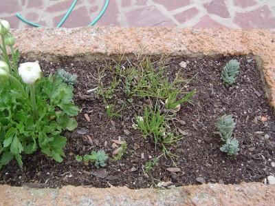 normal_jardinera%20malas%20hierbas%201.JPG
