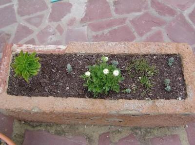 normal_jardinera%20malas%20hierbas%203.JPG