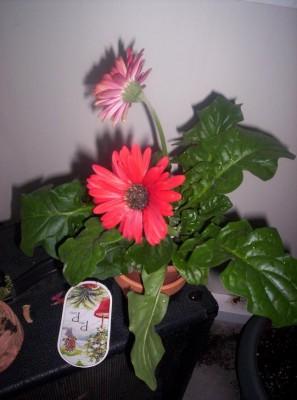 Flores y arbustos que aguantan el sol de madrid - Plantas que aguanten el sol ...