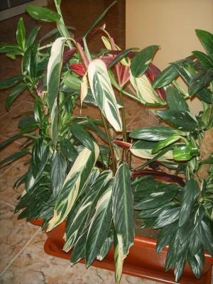 normal_Plantas%20004.jpg