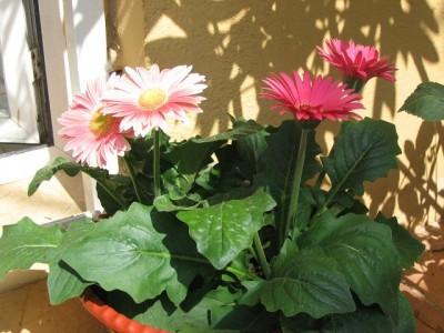 normal_plantas%20y%20flores%20004.jpg