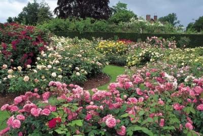 normal_rosegarden.JPG