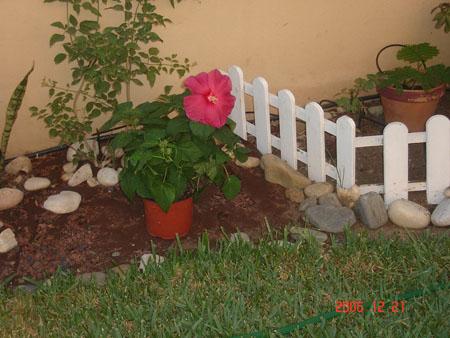 nuevo hibiscus.jpg