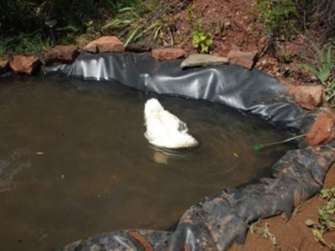 Iniciando mi estanque con l mina de caucho sin filtros ni for Estanques en argentina