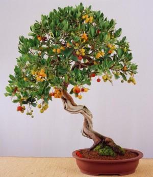 Fotos de nuestros frutales en maceta for Cultivo de arboles frutales en macetas