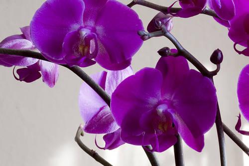 Orquidea-17p.jpg