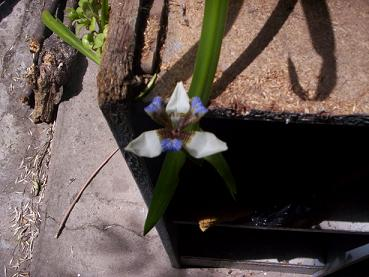 orquidea fea.JPG