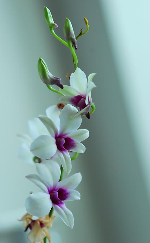 orquidea5.jpg